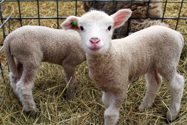 Resultado de imagen para wool